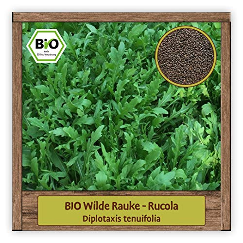 BIO Rucola Samen mehrjährige Salat Sorte (Diplotaxis tenuifolia) Kräutersamen wilde Rauke
