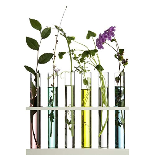 Kunststoff Reagenzglas,Transparent Reagenzgläser mit Natur-Korken,Hochwertig Reagenzgläser, für Labor & Hochzeit Gastgeschenke (2.0 * 15cm)