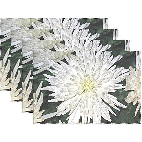 Crisantemi Aster Fiore Impressione Bianco 1038289 Tovagliette Set Di 6 Per Tavolo Da Pranzo...