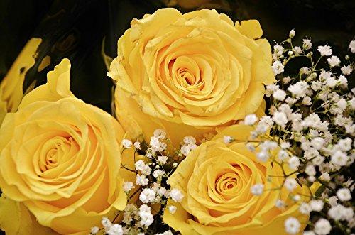 Blumenversand Blumen-Senf Rosenstrauß - Sie wählen die Anzahl der Rosen und der Farbe + gratis Glückwunschkarte (gelbe Rosen)