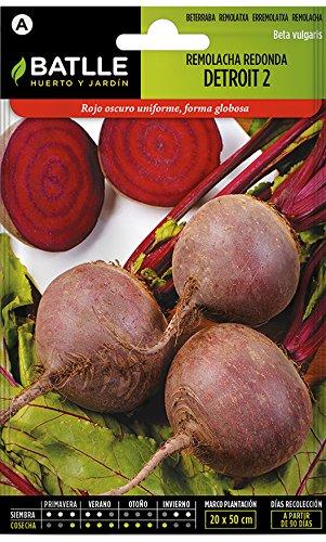 Batlle Gemüsesamen - Rote Rüben Detroit 2 (500 Samen)