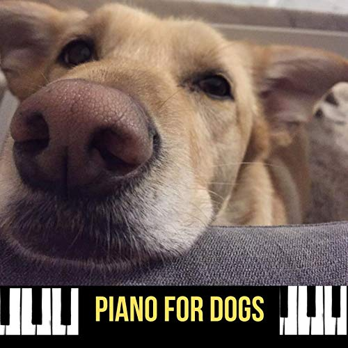 Piano for Dogs