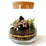 Bicchiere fatto a mano in vetro trasparente, kit fai da te per terrario con coperchio in sughero, per casa, giardino, esposizione, fioriera, piante grasse, cactus, muschio, bonsai, altezza 14 cm