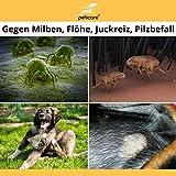 Pilz und Milben beim Hund – Juckreiz durch Pilzbefall und Milbenbefall 100 ml - 2