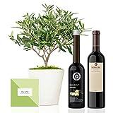 Set Regalo Gourmet Elegant con árbol olivo natural 38 cm en maceta de 16 cm diámetro, guía de cuidados, aceite de oliva virgen extra y vino tinto ecológico entregado en caja de regalo