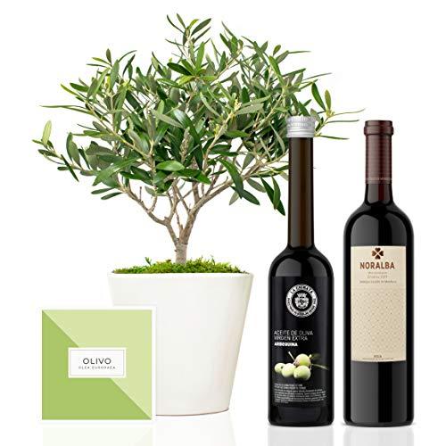 Set Regalo Gourmet Elegant con árbol olivo natural prebonsai 38 cm en maceta de 16 cm diámetro, guía de cuidados, aceite de oliva virgen extra y vino tinto ecológico entregado en caja de regal