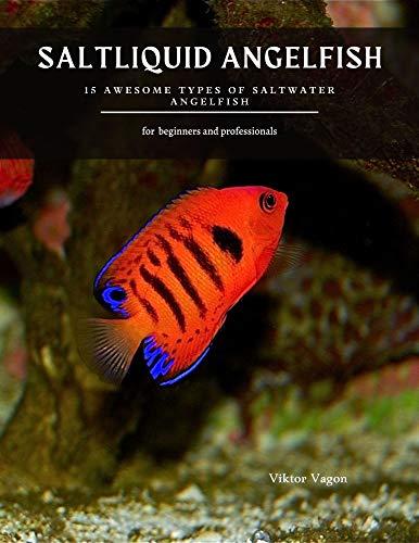 SALTLIQUID ANGELFISH: 15 Awesome Types of Saltwater Angelfish