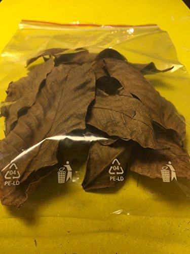 catappa-leaves 10 Stück Walnussblätter Walnussbaumblätter ★BLITZVERSAND im Karton ★ Original Markenware