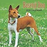 Basenji Dog 2021 Calendar: 12-Month 2021 Calendar with Beautiful Basenji Dog Photographs