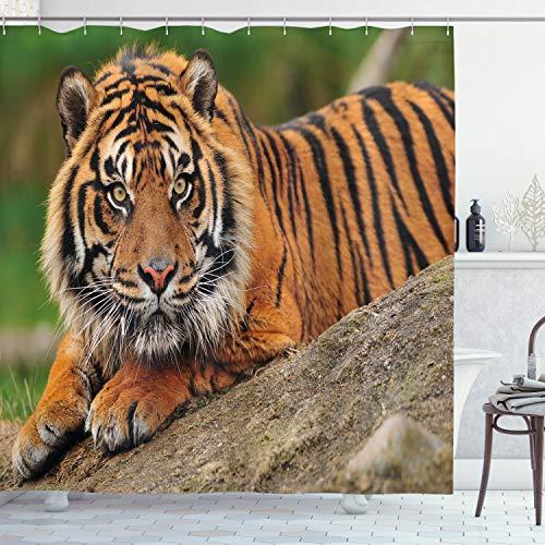 ABAKUHAUS Tiger Duschvorhang, Crouching Tiger auf Felsen, Seife Bakterie Schimmel & Wasser Resistent inkl. 12 Haken & Farbfest, 175 x 180 cm, Multicolor