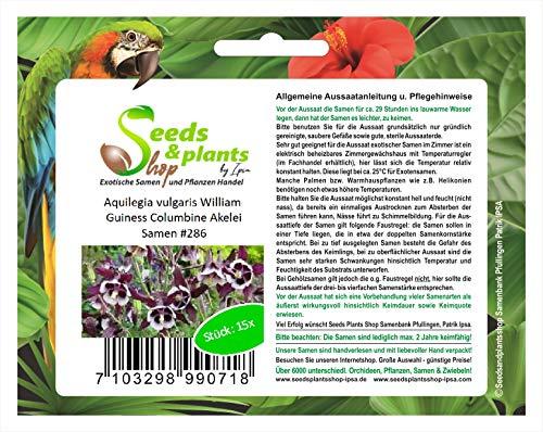 Stk - 15x Aquilegia vulgaris William Guiness Columbine Akelei Samen #286 - Seeds Plants Shop Samenbank Pfullingen Patrik Ipsa