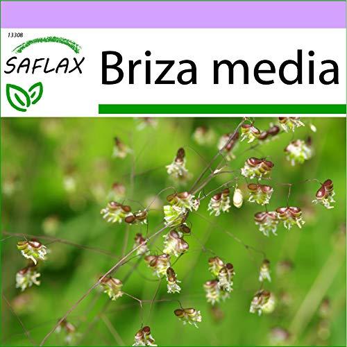 SAFLAX - Gräser-Bambus-Herz-Zittergras/Jungfernhaar - 75 Samen - Briza media