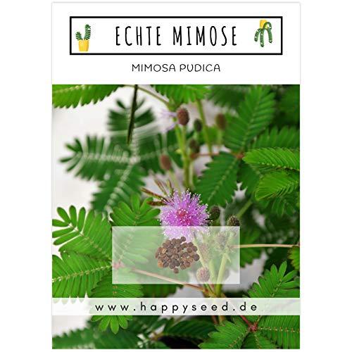 Echte Mimose Samen (Mimosa Pudica) mit hoher Keimrate - Pflanzen Samen für vielblütige & bewegungsfrohe Mimosen