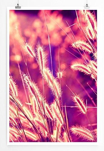 Eau Zone Home Bild - Naturbilder – Schilfrohr im Warmen Sonnenlicht- Poster Fotodruck in höchster Qualität