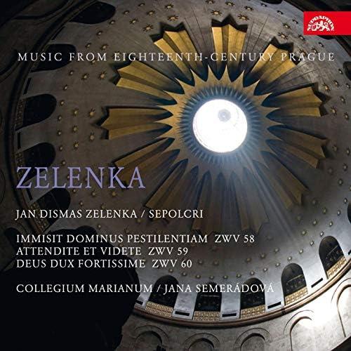 Jana Semerádová, Collegium Marianum