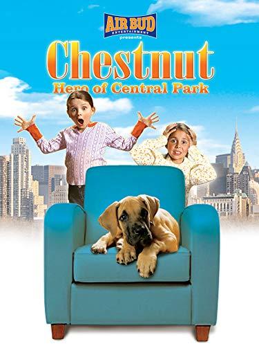 Chestnut_Hero Of Central Park