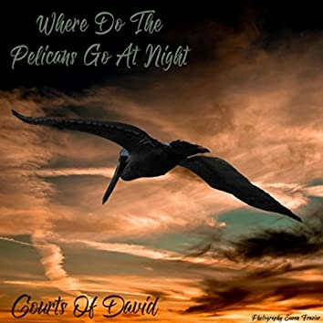 Where Do the Pelicans Go at Night
