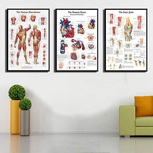 DLFALG Cuadro anatómico cuerpo humano anatomía médica arte pintura lienzo póster pared arte impresión imágenes hogar Offcie Decor-40x50cmx3 sin marco