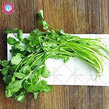 Coriandre véritables légumes 50pcs graines de culture facile fruits en pot organiquement de jardin Ferme Cour