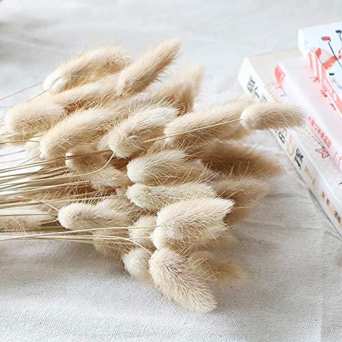 Natural Dried Lagurus ovatus 100 Pcs, Dried Pampas Grass Flower Arrangements Wedding Home Decor