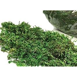Yalulu 100g Artificielle Herbe Pelouse Grass Mousse Intérieur Extérieur Vert Synthétique Gazon Micro Ornement Paysage…
