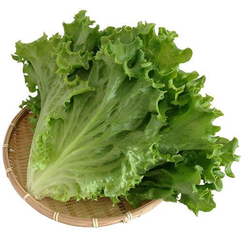 国産サラダ野菜 新鮮グリーンリーフレタス業務用 2kg 水耕栽培