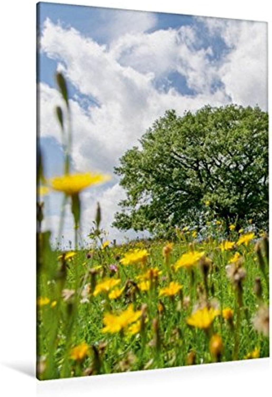 Calvendo Premium Textil-Leinwand 80 x 120 cm Hoch-Format August  Die Wiese vor der Eiche ist in voller Blüte. Hhepunkt des Sommers.   Wandbild, HD-Bild auf von Ingo Gerlach GDT Natur Natur