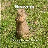 Beavers 8.5 X  8.5 Calendar September 2020 -December 2021: Monthly Calendar with U.S./UK/ Canadian/Christian/Jewish/Muslim Holidays-Nature Animals Wildlife