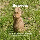 Beavers 8.5 X  8.5 Calendar September 2020 -December 2021: Monthly Calendar with U.S./UK/ Canadian/Christian/Jewish/Muslim Holidays-Nature Animals Wildlife