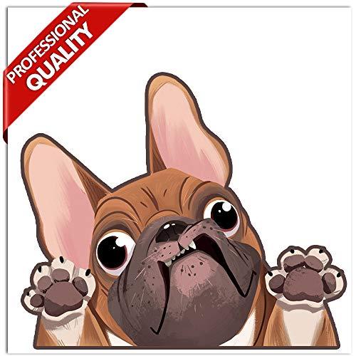 Biomar Labs® 1 x Vinyl Aufkleber Autoaufkleber Sticker Dog Hund Französische Bulldogge French Bulldog B 225
