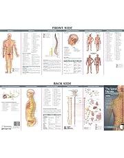 Nervios espinales y el sistema nervioso autónomo: Guía de estudio (Anatomía ilustrada de bolsillo de la Compañía de Gráfico anatómico)