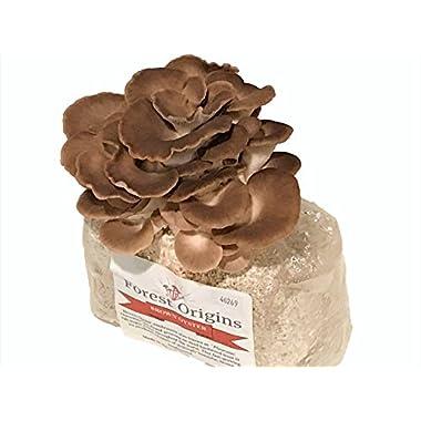 New Organic Brown Oyster Mushroom Farm - Beautiful Mushroom Growing Kit - All in One Indoor Growing Kit