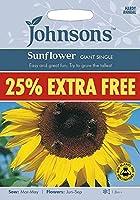 【輸入種子】 Johnsons Seeds Sunflower GIANT SINGLE 25% EXTRA FREE サンフラワー(ひまわり)・ジャイアント・シングル 25% EXTRA FREE(25%増量) ジョンソンズシード