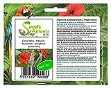Stk - 20x Canna Indica Indisches Blumenrohr Zierpflanzen Samen HW2 - Seeds Plants Shop Samenbank Pfullingen Patrik Ipsa