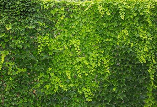 vrupi 8x6.5ft Frühling vibrierend Boston Ivy Wand Vinyl Fotografie Hintergrund Hecke lebender Zaun Topiary Laub Hintergrund Frühling szenische Landschaft Tapete Thema Party Banner Studio