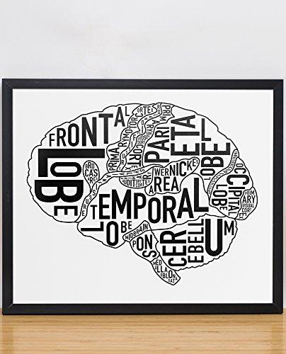 Brain Anatomy Art Poster
