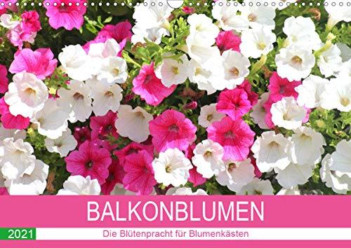 Balkonblumen. Die Blütenpracht für Blumenkästen (Wandkalender 2021 DIN A3 quer)