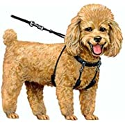 SPORN Dog Halter, Blue, Small