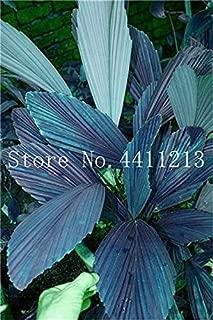 Mejor Exotic Bonsai Tree de 2020 - Mejor valorados y revisados