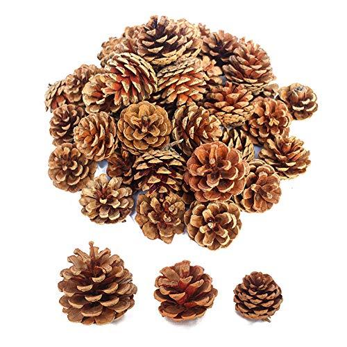Lifreer 30 piezas de conos de pino seco natural adornos de Navidad piñas para árbol de Navidad fiesta colgante decoración DIY Artesanía - Marrón, 3 tamaños