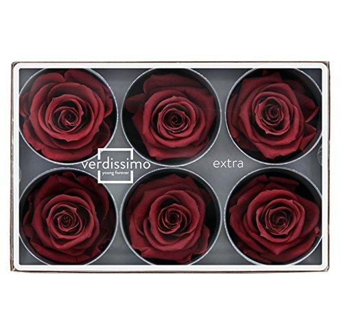 Verdissimo Cabeza de Rosa Preservada 6 Unidades Tamaño Extr