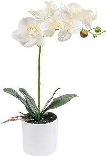 SHACOS Sztuczna orchidea biała sztuczna sztuczna Phalaenops