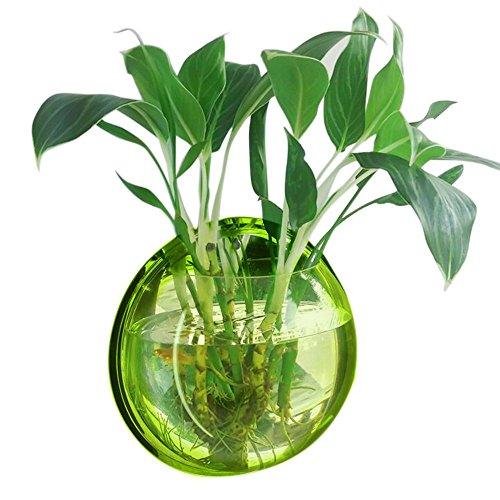 Vert Acrylique Rond Mur Suspendu Poisson Cuvette Aquarium Réservoir pour Poisson D'or et Bêta Vase Plantes Vase Décoration Pot, 23 cm Diamètre