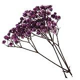 1 Beutel Gefärbt Gepresste Getrocknete Blätter Herbarium DIY Kunsthandwerk Scrapbooking - Lila