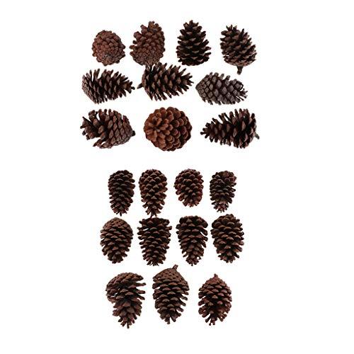 Sharplace 20 Stücke Tannenzapfen Schwarzkiefer Zapfen Natürliche Kiefernzapfen Weihnachtsbaum Dekoration 6-10 cm