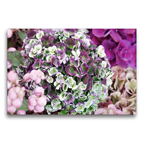 Premium Textil-Leinwand 75 x 50 cm Quer-Format Hortensie 'Magical Revolution' | Wandbild, HD-Bild auf Keilrahmen, Fertigbild auf hochwertigem Vlies, Leinwanddruck von Gisela Kruse