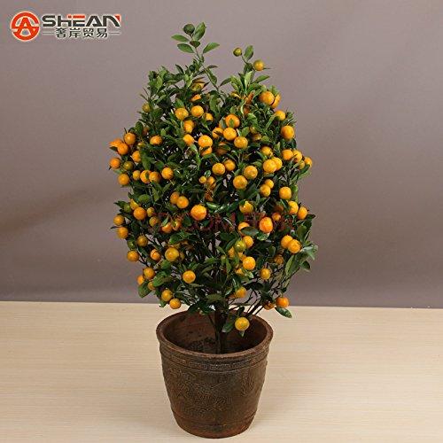100pcs / bag Balcon Patio pot arbres fruitiers plantés Graines Kumquat Graines d'Orange Seeds Tangerine Citrus