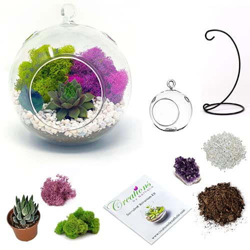 DIY Terrarium Kit for Adults with Live Succulent Plant (Fresh from...