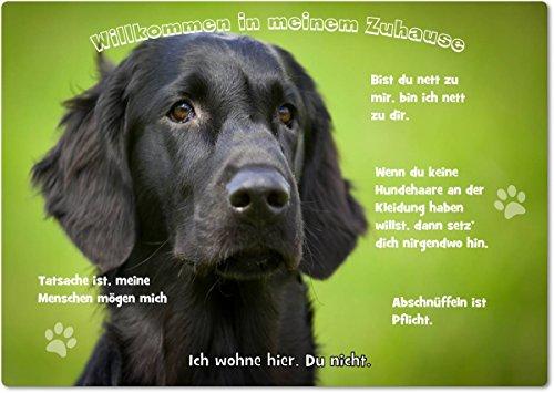 Merchandise for Fans Blechschild/Warnschild/Türschild - Aluminium - 20x30cm - - Willkommen in Meinem Zuhause - Motiv: Golden Retriever/Labrador Flatcoated Retriever - 05