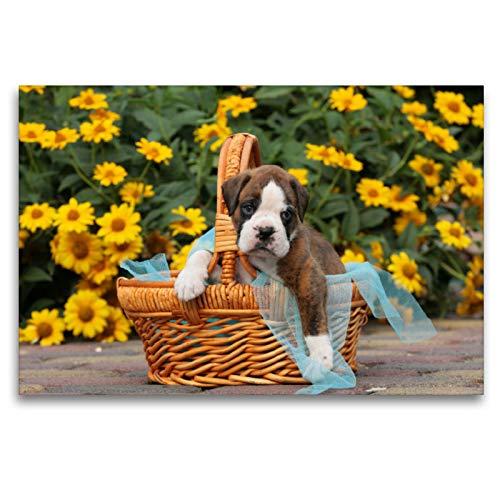 Premium Textil-Leinwand 120 x 80 cm Quer-Format Ein Korb voll Glück - Boxerbaby | Wandbild, HD-Bild auf Keilrahmen, Fertigbild auf hochwertigem Vlies, Leinwanddruck von Kerstin Mielke